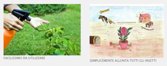 biolady insetti